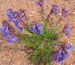 wildflowers3