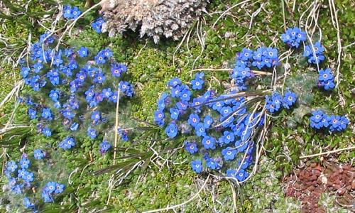 wildflowers4