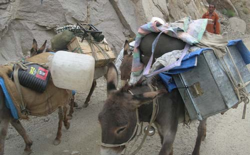 pack animals in Ladakh