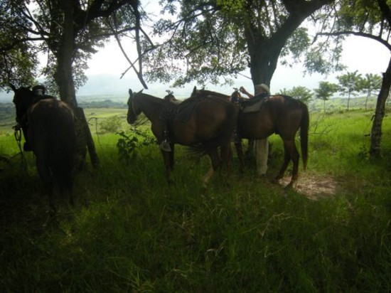 Paso Fino horses [640x480]