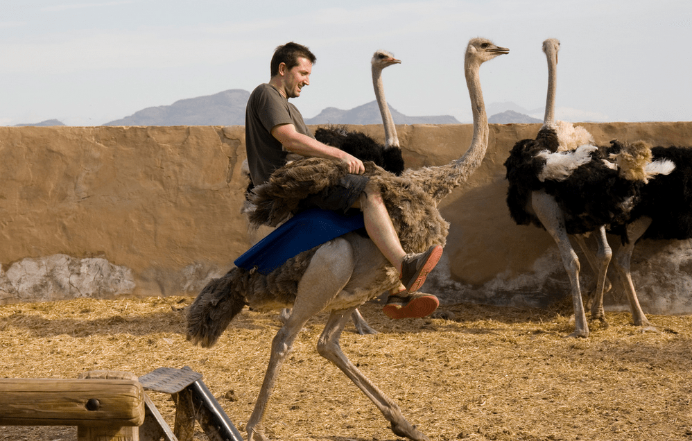 Ostrich Ride South Africa