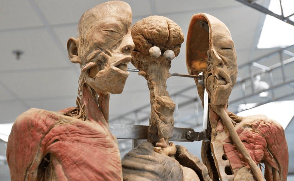 The human body museum of bangkok.