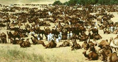 Pushkar Fair, Rajasthan, India