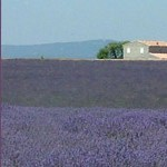 Bicycle vacations in Provence