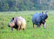 One-horned rhino