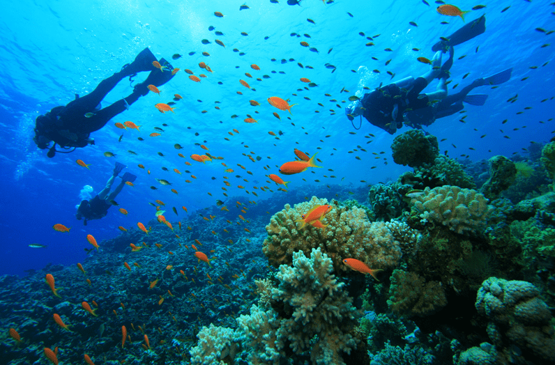 Negril,Scuba Diving Jamaica Caribbean