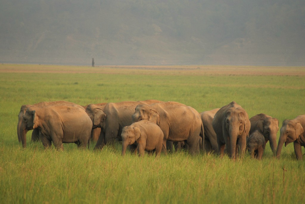 Jim Corbett National Park , India