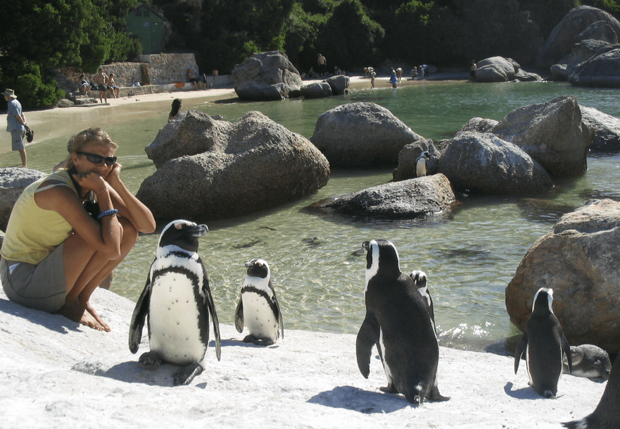 Boulder Beach Penguins Capetown South Africa