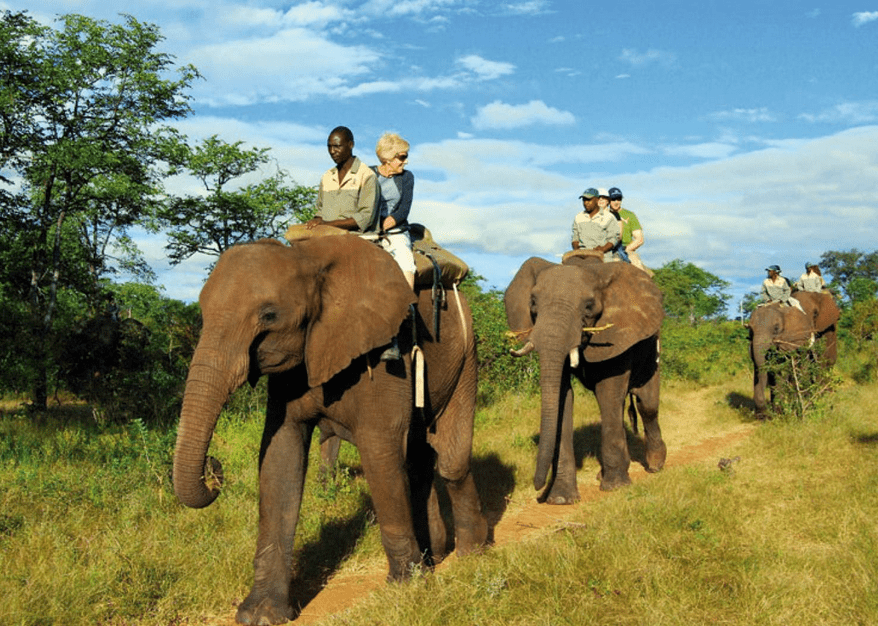Elephant Safari in South Africa
